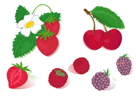 Red isolated fruits- strawberry, cherry, raspberry and blackberry.  Illustration