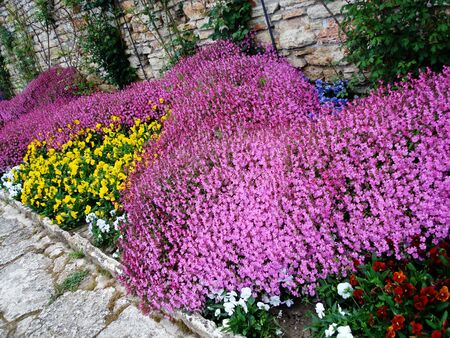 Beautiful colored spring garden