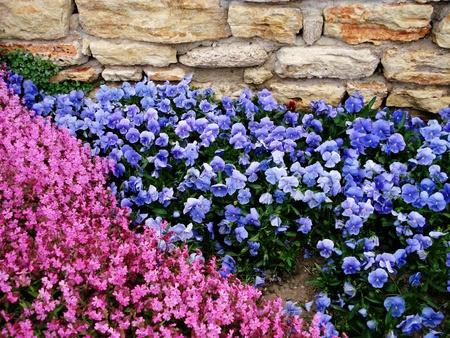 Background of spring flowers  Botanic Garden in Balchik, Bulgaria