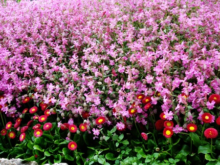 Beautiful spring pink flowers                                Stock Photo