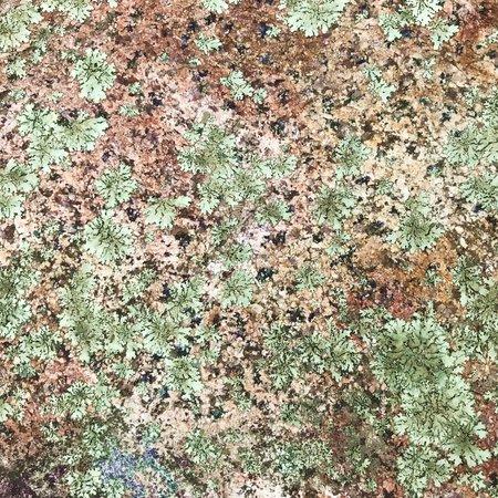 rock texture with lichen