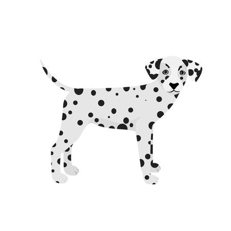 dalmatian: Dalmatian dog isolated on a white background