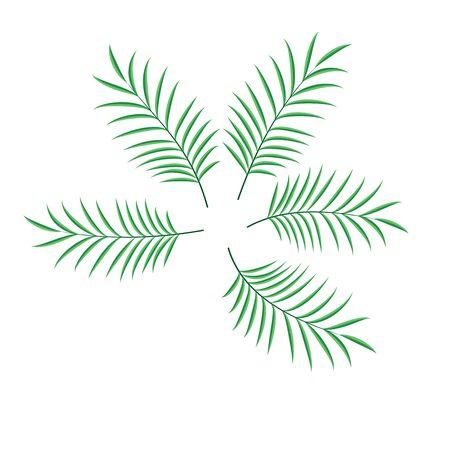 Palm leaf set vector isolated illustration