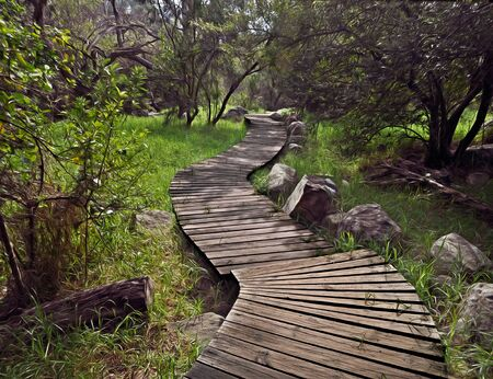 grades: Wooden Path in a forest with trees and grades