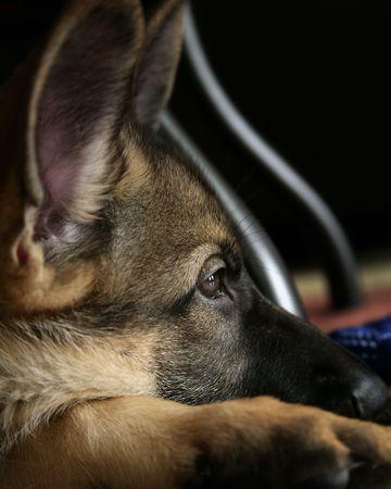 犬 写真素材 - 7505442