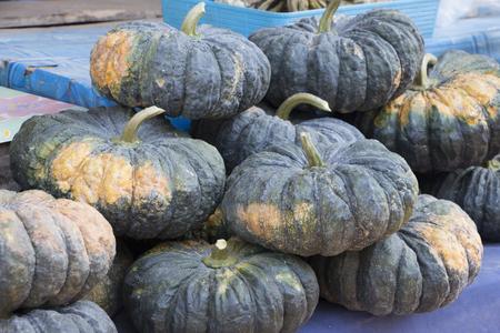 sale pumpkin harvest country farm