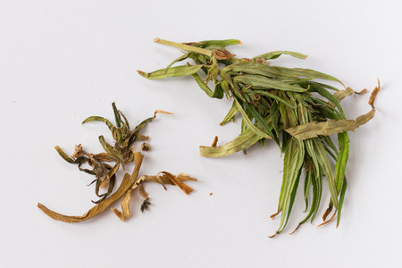 cannabinoid: leaf of cannabis on white background Stock Photo