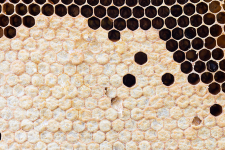 praiseworthy: honeycomb with sweet honey