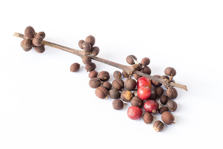 unpicked: coffee beans on white background