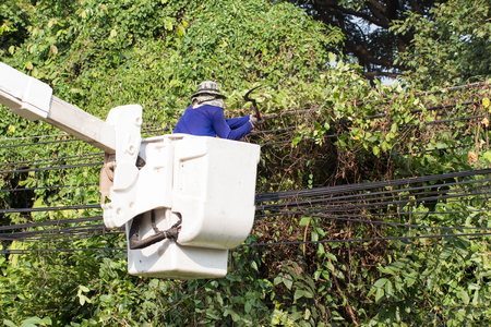 out of job: Tree Worker evaluating the job from a bucket truck - removing branches - what out for that electric line