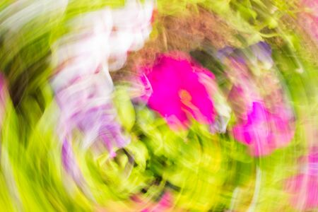 flori culture: Abstract colorful composition with pink, lilac, yelow and white strokes effect rotation