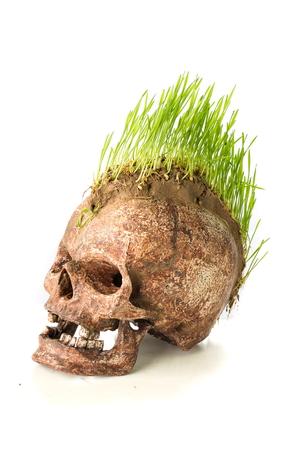 unfavorable: Grow green wheat seedling on head of skull Stock Photo