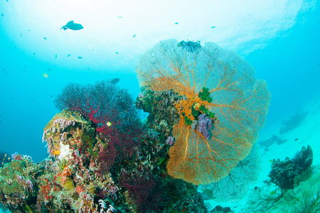 wild animal: Wonderful and beautiful underwater world with corals, fish and sunlight Stock Photo