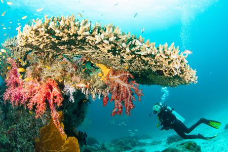 KHAO LAK, THAILAND - MAART 1: Hoger vrouwenscuba-duiken onderwater op een duikplaats in Similan-Eilanden op 1 Maart, 2009. Similan-eilanden zijn de belangrijkste duikbestemming van Thailand