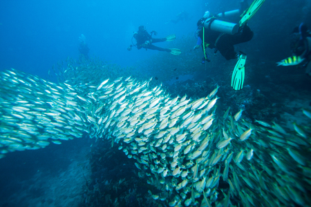 Scuba diving, fish and coral reef underwater 写真素材