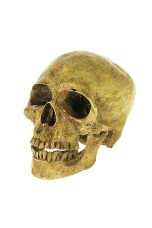 human skull isolated on white background and clipping path