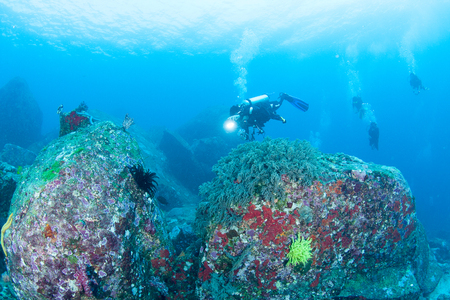 Wonderful and beautiful underwater world with corals, fish and sunlight 写真素材