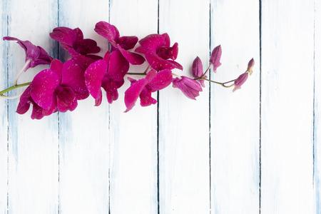 ホワイトブルーの美しい紫色 (ピンク) の蘭の花が描かれた木製の背景トップビュー