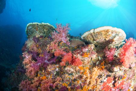 カラフルな魚や海洋生物と深い青い海のサンゴ礁の風景の背景と素晴らしいと美しい水中世界 写真素材 - 91695881