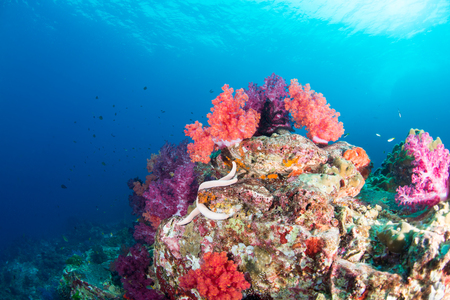 カラフルな魚や海洋生物と深い青い海のサンゴ礁の風景の背景と素晴らしいと美しい水中世界