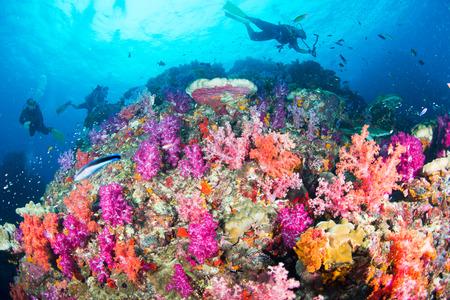 カラフルな魚や海洋生物と深い青い海のサンゴ礁の風景の背景と素晴らしいと美しい水中世界 写真素材 - 91360356