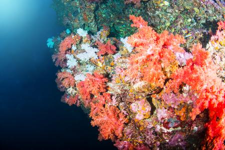 カラフルな魚や海洋生物と深い青い海のサンゴ礁の風景の背景と素晴らしいと美しい水中世界 写真素材 - 94649197