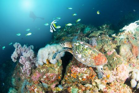 ホークスビルウミガメ、魚、カラフルな魚や海洋生物と深い青い海のサンゴ礁の風景の背景と素晴らしいと美しい水中世界