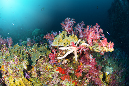 Wonderful and beautiful underwater world with ccoral reef landscape background in the deep blue ocean with colorful fish and marine life 写真素材