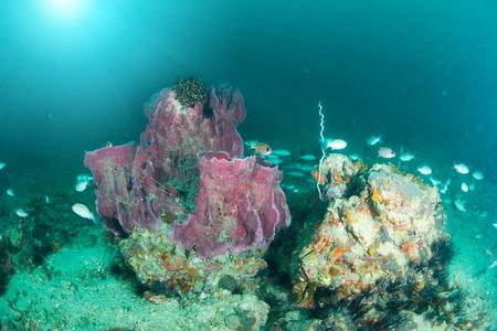 カラフルな魚や海洋生物と深い青い海のサンゴ礁の風景の背景と素晴らしいと美しい水中世界 写真素材 - 94613538