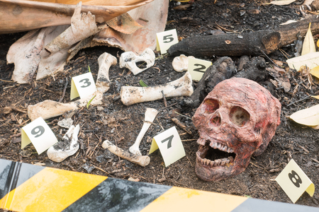 Group of evidence marker number Skeleton partially buried in dirt  in crime scene investigation Stock Photo
