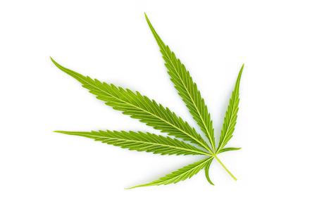 Marijuana leaves, cannabis on white background 写真素材