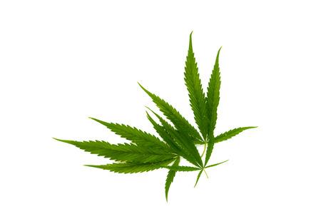 Marijuana leaves, cannabis on white background, beautiful corner background, 写真素材