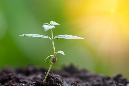 marijuana, Cannabis seedling close up on background Imagens - 104879590