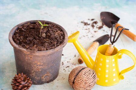 Baby cannabis plant. Vegetative stage of marijuana growing. Garden tools Stock fotó