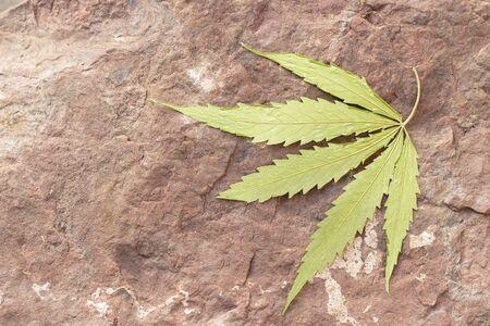 Dry Cannabis, Marijuanna leaf on rock