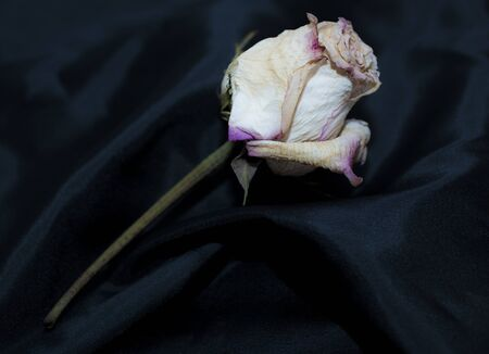 parting: dead rose flower on black silk symbolizing death and parting Stock Photo