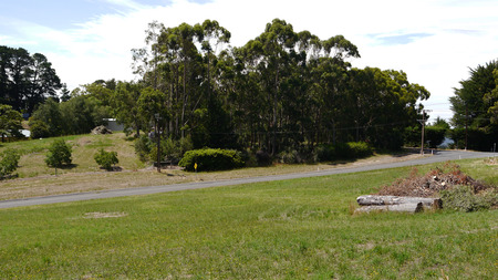 adelaide: beautiful hills with eucalyptus trees in the suburbs of Adelaide, South Australia in January 2017