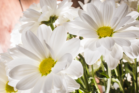 A bouquet of white chrysanthemums illuminated from within