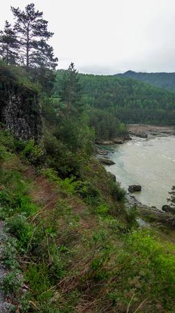 katun: Landscape of the Altai Mountains, Siberia, the rapid flow of the mountain river Katun, the precipice and pine trees