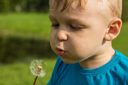 a little enthusiastic boy blows on a dandelion and the seeds scatter in different directions
