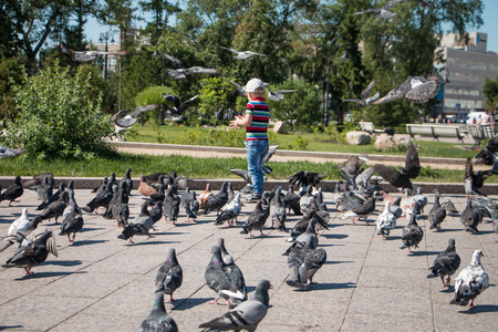 Little funny boy of three years feeding pigeons in the Park on a hot summer day