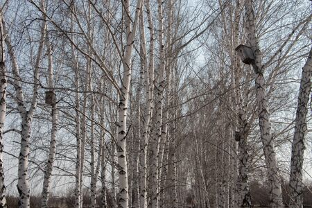 several wooden birdhouses on birches in the Park in early spring