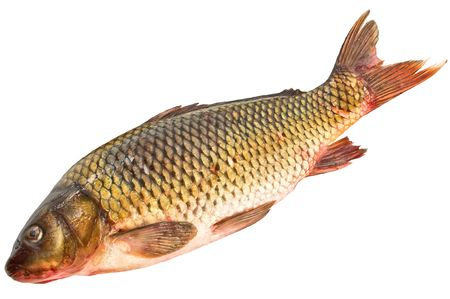 freshwater fish: Natural large fish a golden carp isolated on a white background