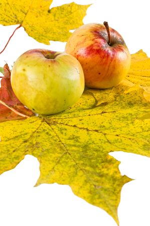 Apples on autumn leaves isolated on a white background photo