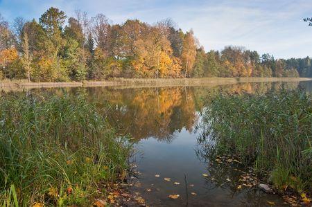 Autumn coast of lake with colourful trees and a cane photo