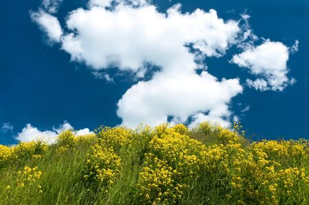 Landscape of a hilly meadow with yellow flowers against the bright cloudy sky photo