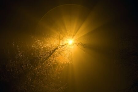 Streetlight in a night fog shining through a tree a mystical aura photo