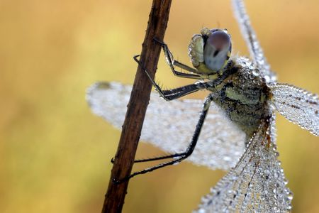 Dragonfly Stock Photo - 2927346