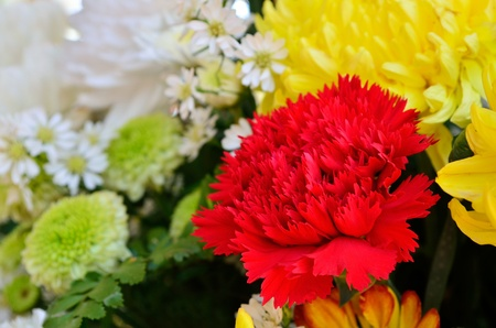 pot light: A beautiful flowers in a vase  red carnations   yellow chrysanthemum close up