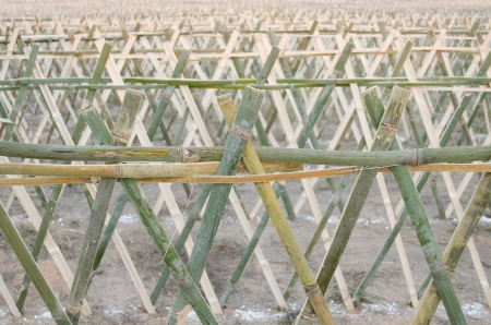 favorable: The bamboo fence lace on the ground for ceremony of favorable thing at Chiang Rai province northern of Thailand